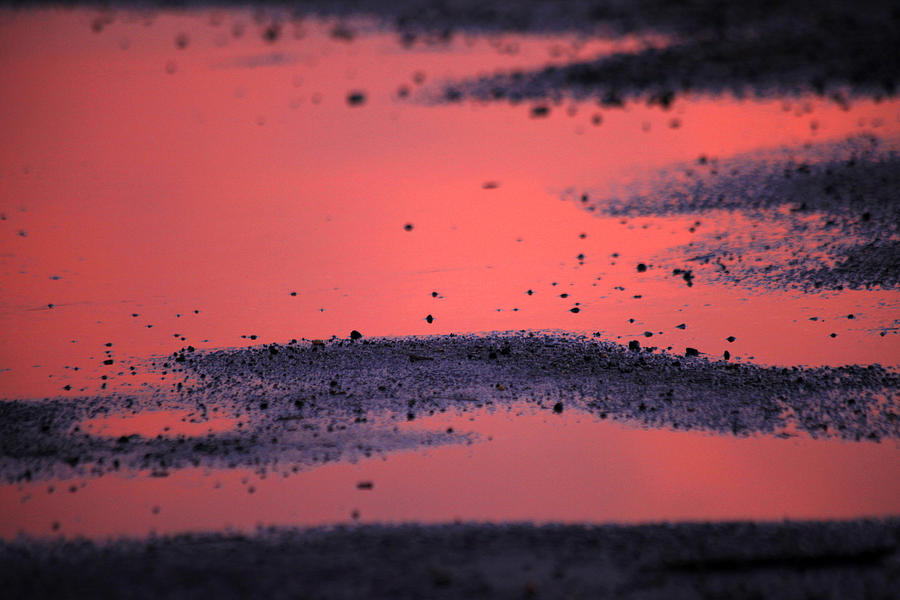 Hot Pink Puddle Photograph