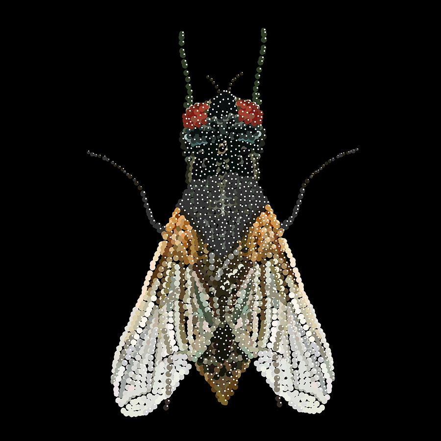 House Fly Bedazzled Digital Art