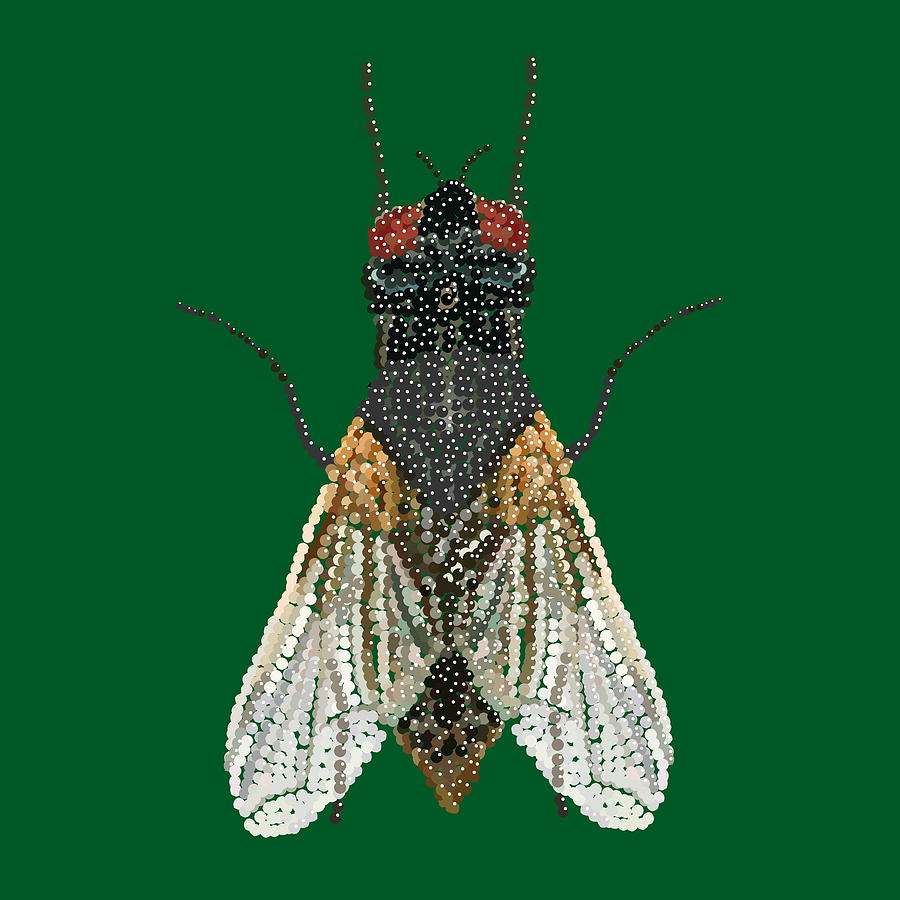 Fly. House Fly Digital Art - House Fly In Green by R  Allen Swezey
