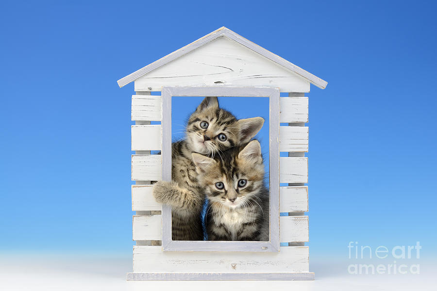 Two Digital Art - House Of Kittens Ck528 by Greg Cuddiford