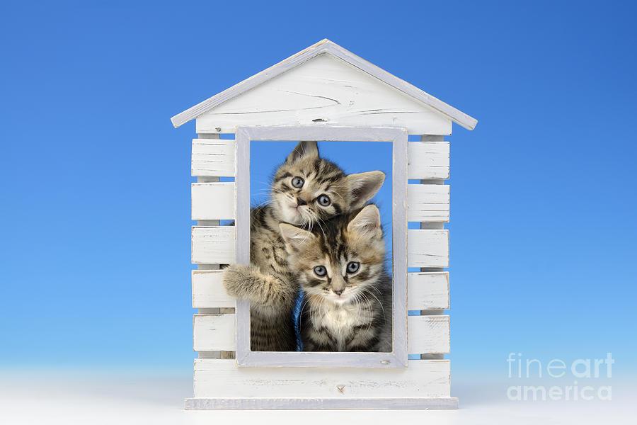 House Of Kittens Ck528 Digital Art
