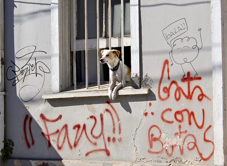 How Much Is That Doggie In The Window? Photograph