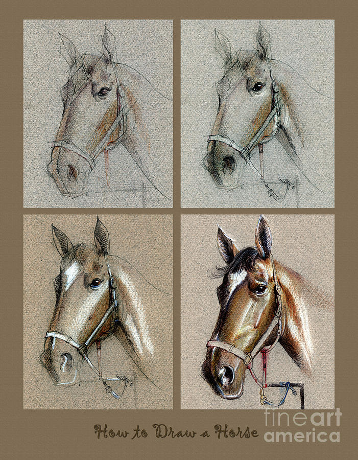 Pastel Drawing - How To Draw A Horse Portrait by Daliana Pacuraru