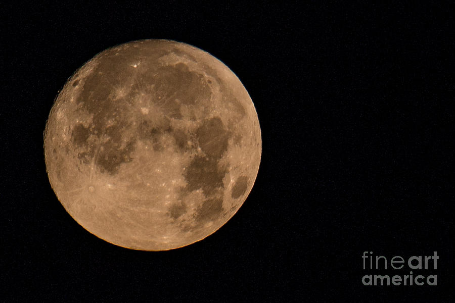 Howl At The Moon Photograph