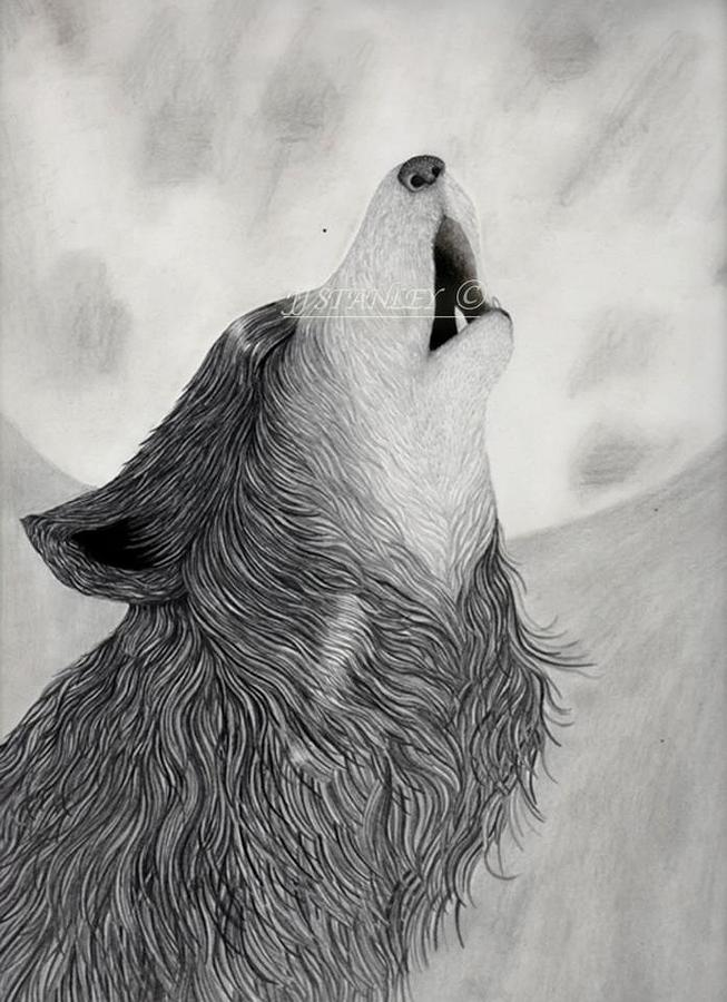 Black Wolf Howling Drawing Wolf Howling Drawings