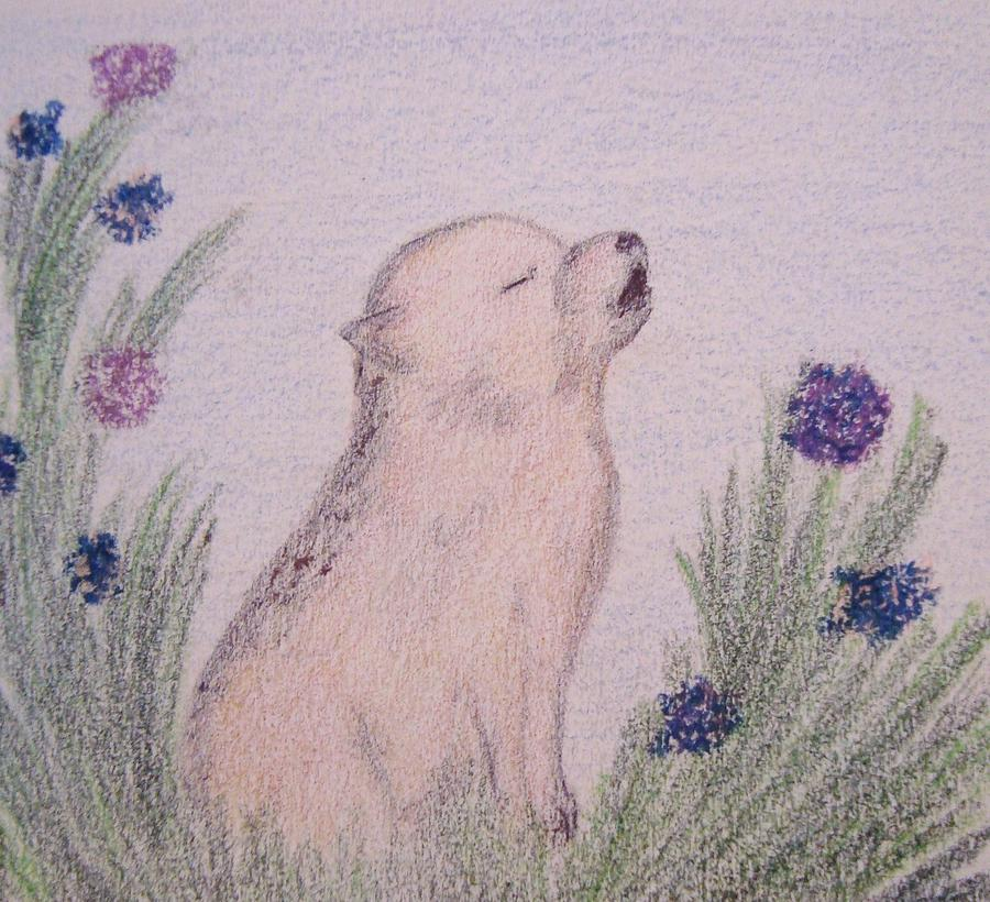Wolves And Nature Drawing - Howling Wolf Pup by Christine Corretti