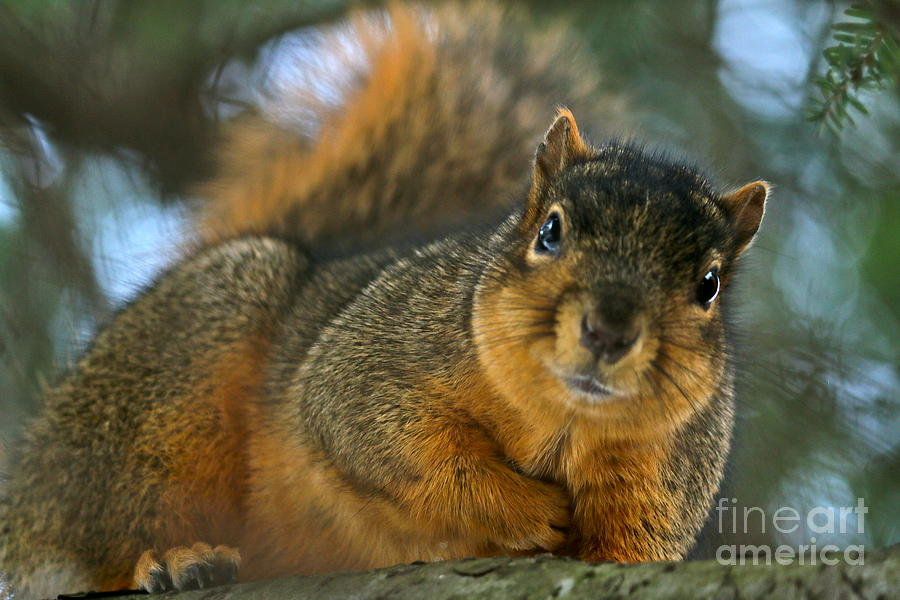 Animals Photograph - Hows This Pose by Jay Nodianos