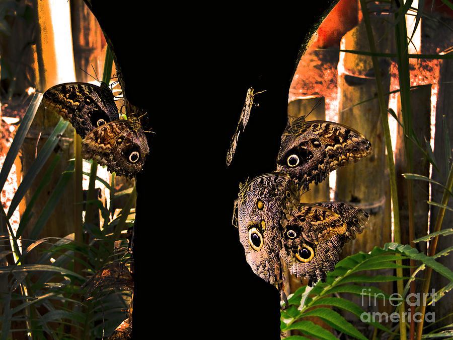 Huge Photograph - Huge Butterflies In Mindo by Al Bourassa