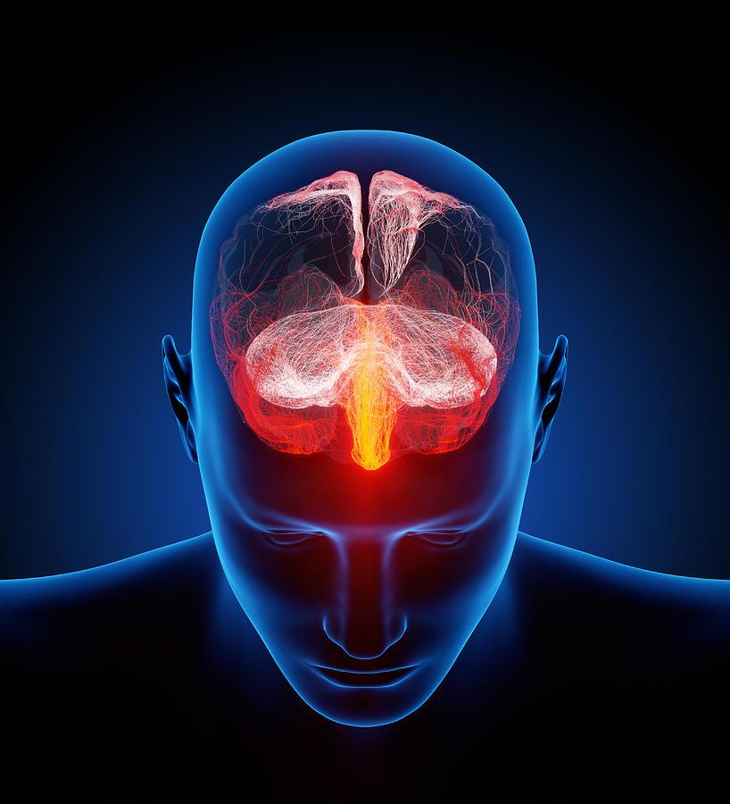 Human Brain Photograph
