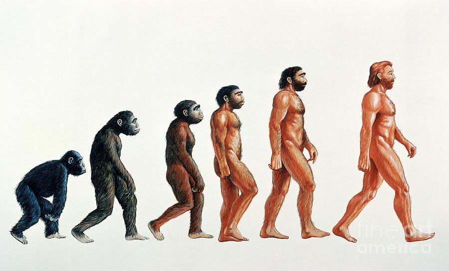 Anthropology Photograph - Human Evolution by David Gifford