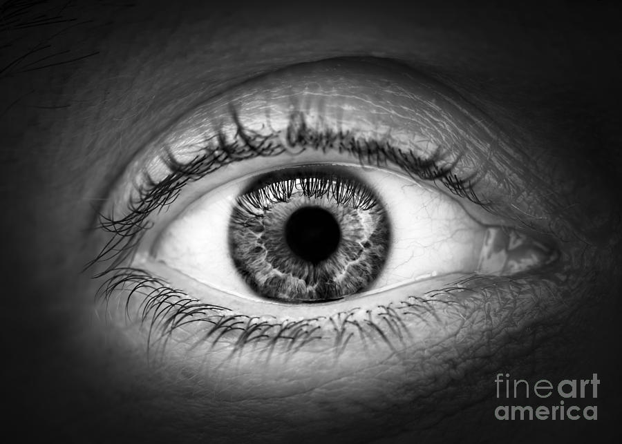 Eye Photograph - Human Eye by Elena Elisseeva