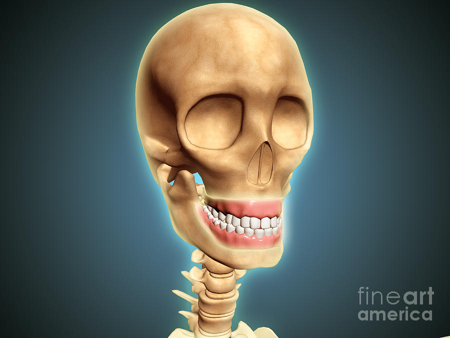 Human Skeleton Showing Teeth And Gums Digital Art