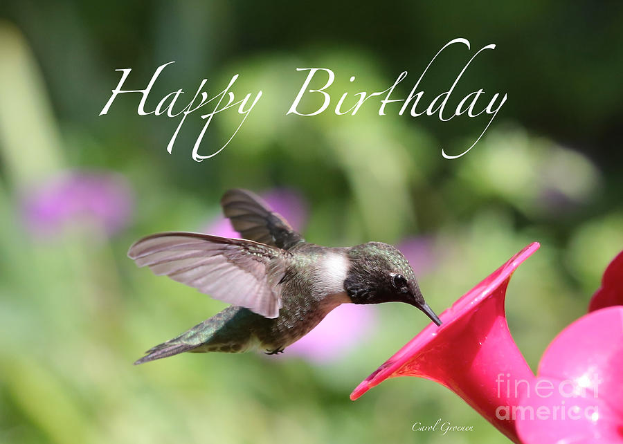 Hummingbird At Feeder Birthday Card by Carol Groenen: fineartamerica.com/featured/hummingbird-at-feeder-birthday-card...