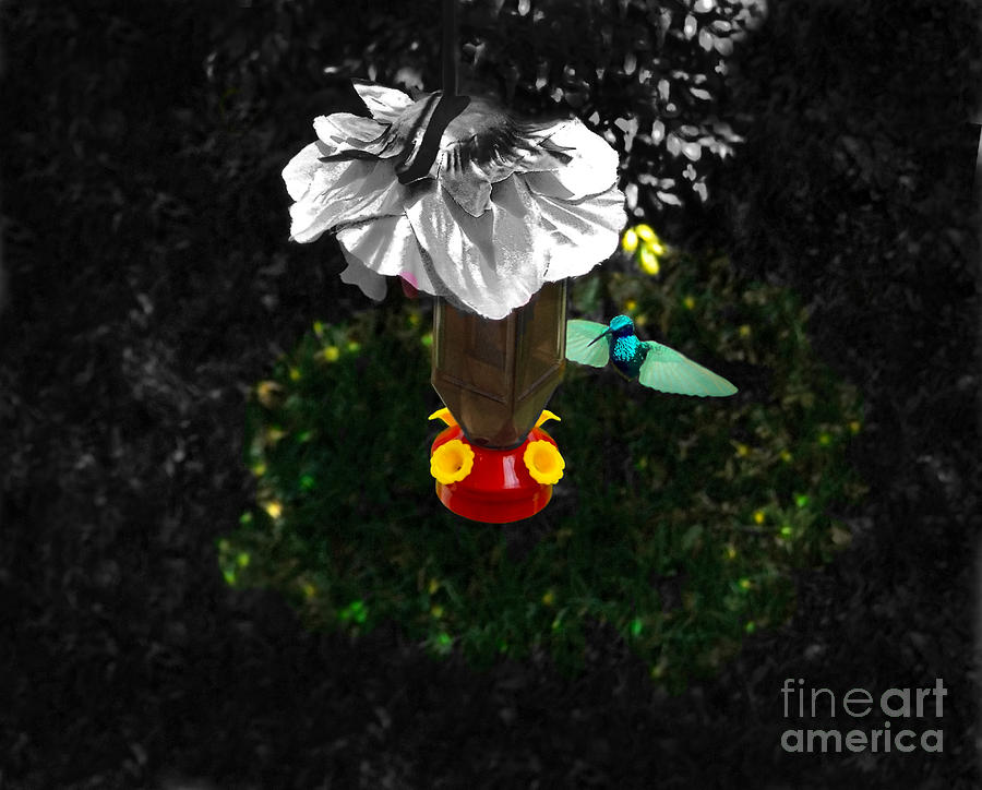 Hummingbird In The Spotlight Photograph  - Hummingbird In The Spotlight Fine Art Print