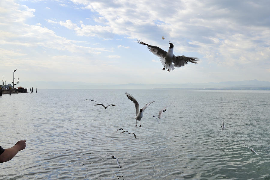 Hungry Seagulls Flying In The Air Photograph