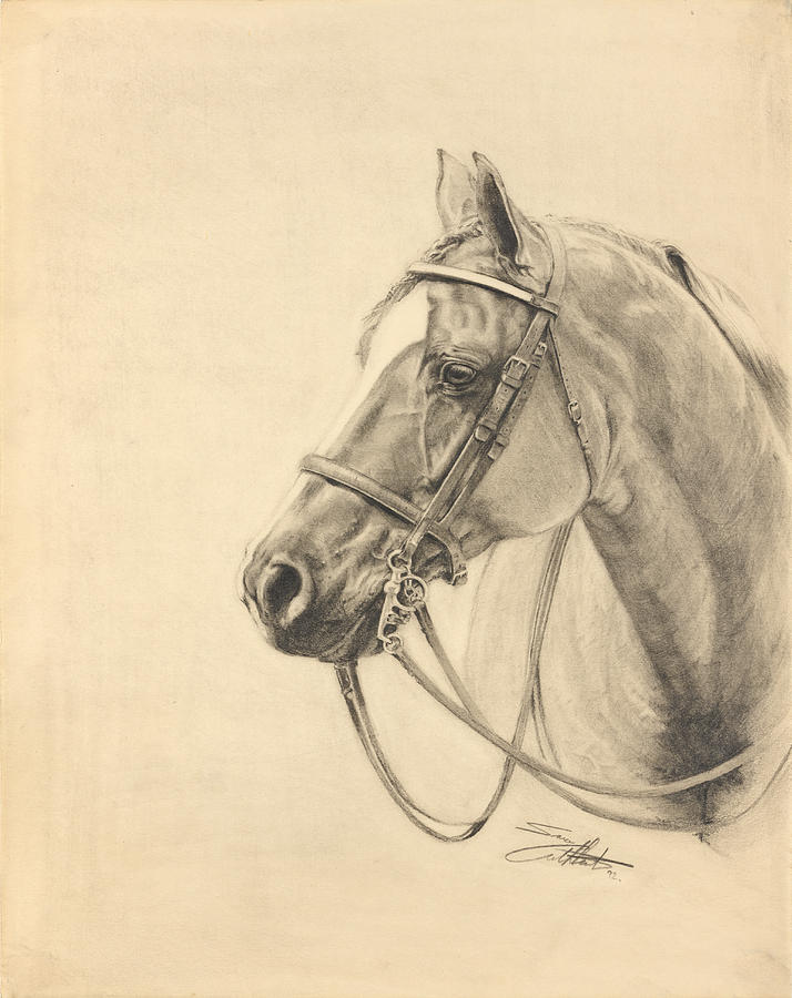 Hunt Seat Quarter Horse Drawing by Sara Cuthbert