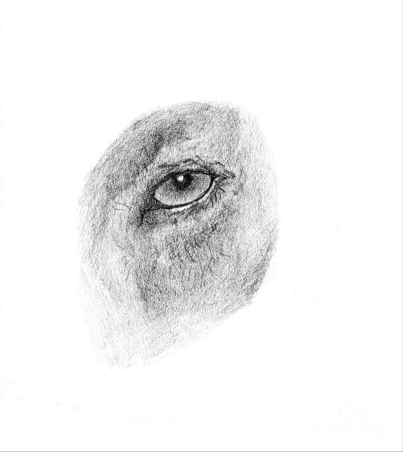 Hunters Eye Drawing