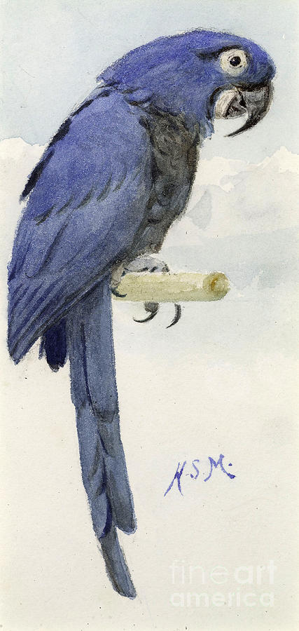 Hyacinth Macaw Painting - Hyacinth Macaw by Henry Stacey Marks
