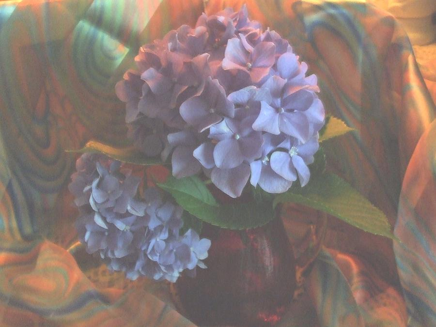 Hydrangea Photograph - Hydrangea 1 by Teri  Haley