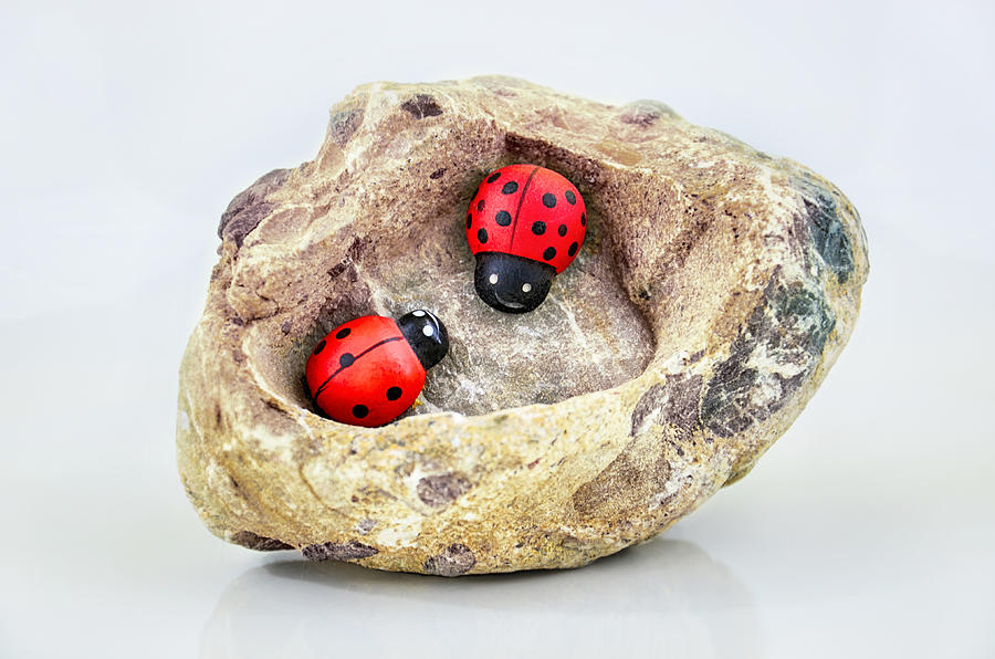 I Love You - Says Ladybugs Photograph  - I Love You - Says Ladybugs Fine Art Print