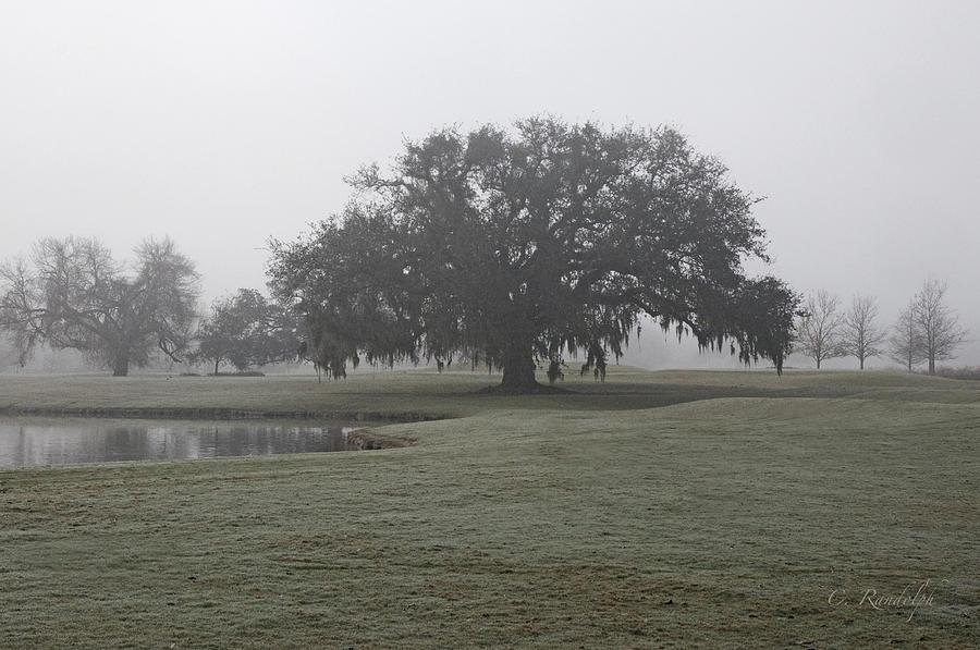 Live Oak Tree Photograph - I Saw In Louisiana by Cheri Randolph