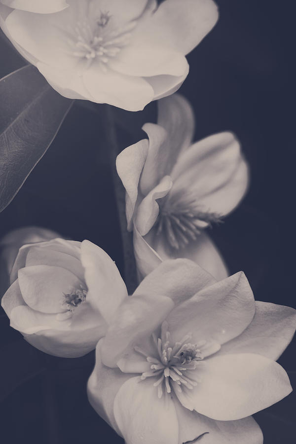 I Was Always Your Flower Photograph