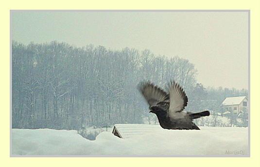 Birds Photograph - I Wish I Was A Bird Sometimes... by Marija Djedovic