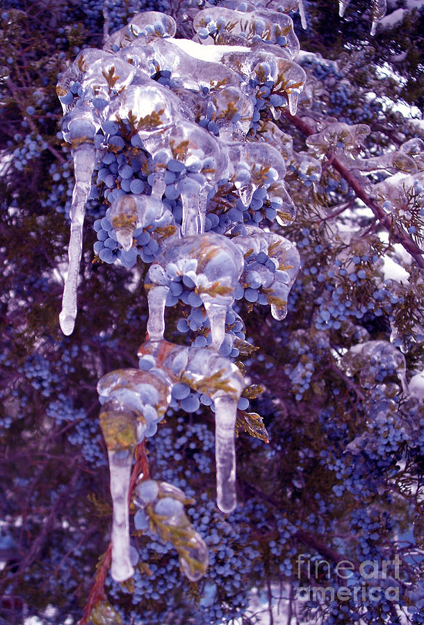 Ice In Purple Photograph