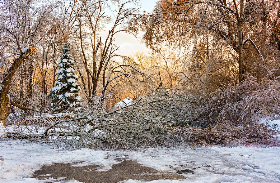 Steve Harrington Photograph - Ice Storm...day 2 by Steve Harrington