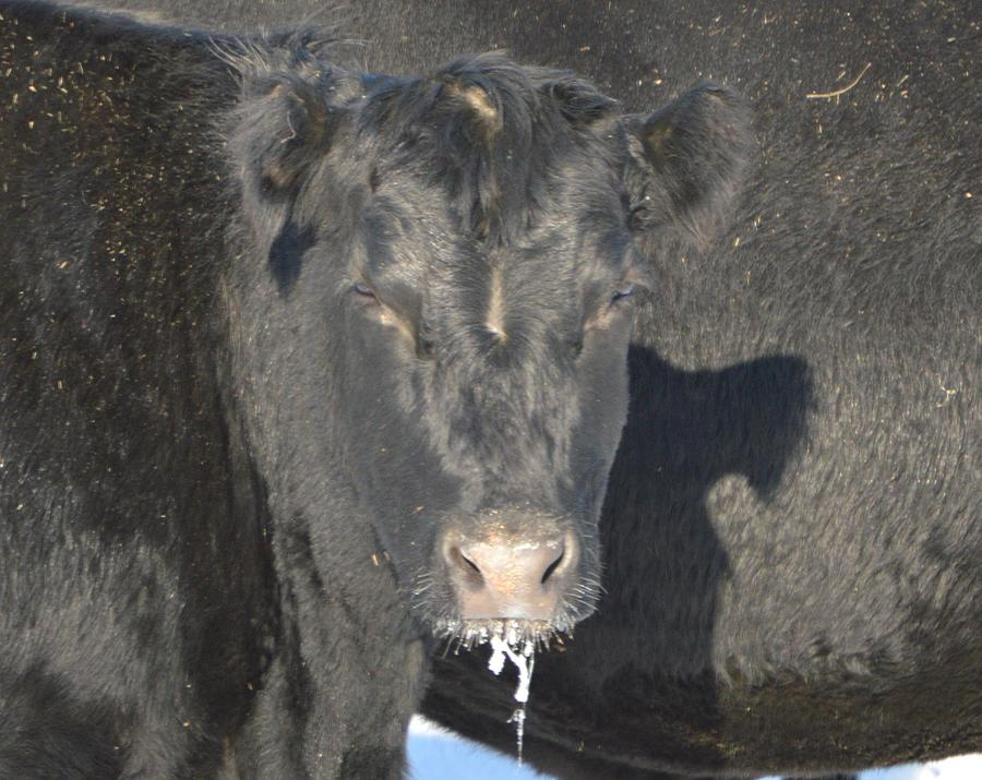 Iced Beef Photograph