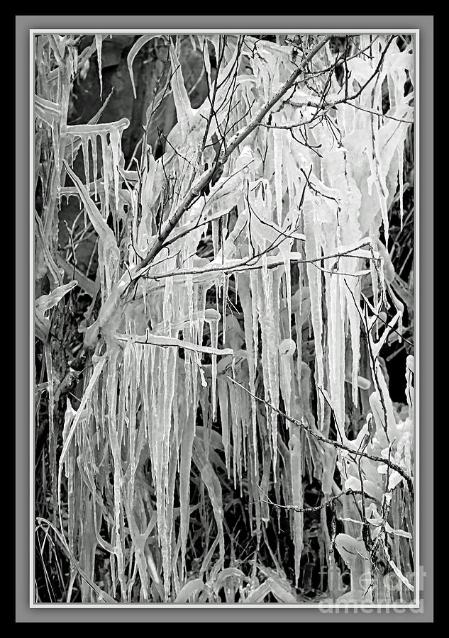 Icicles In Black And White Photograph