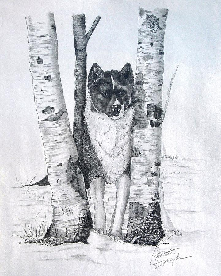 Ihasa In The Woods Drawing