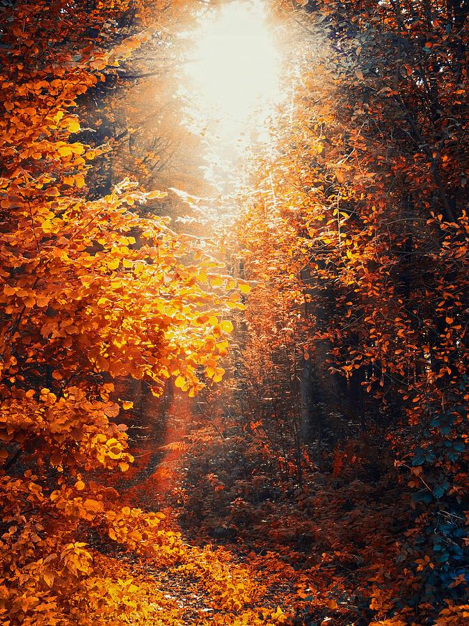 Illuminated Forest Photograph