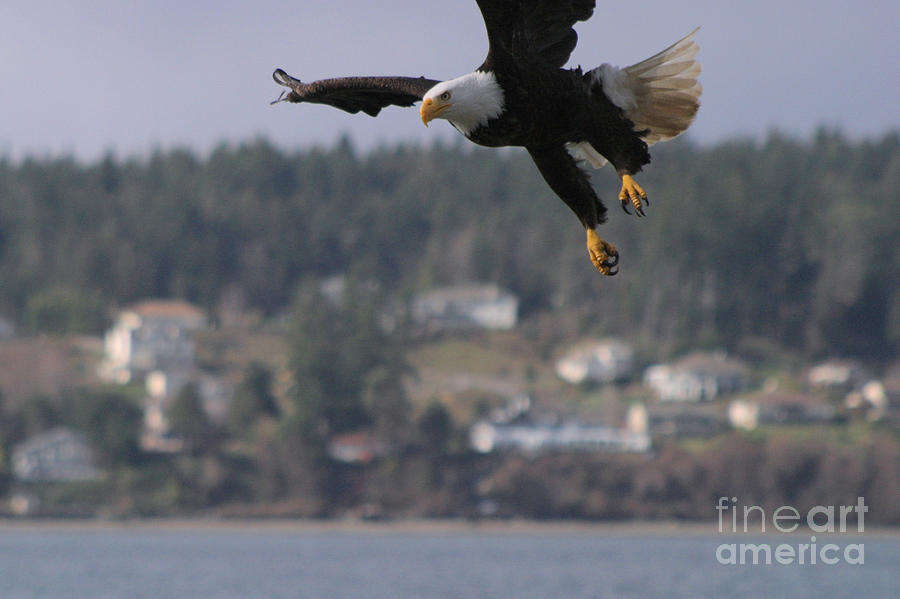 Animals Photograph - Im Coming In For A Landing by Kym Backland
