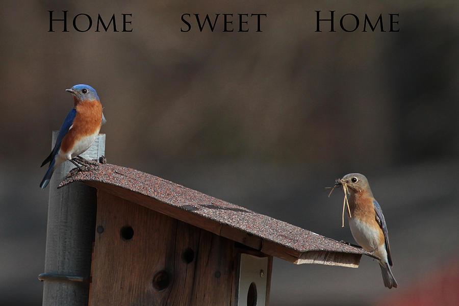 Im Gonna Make This House A Home Photograph