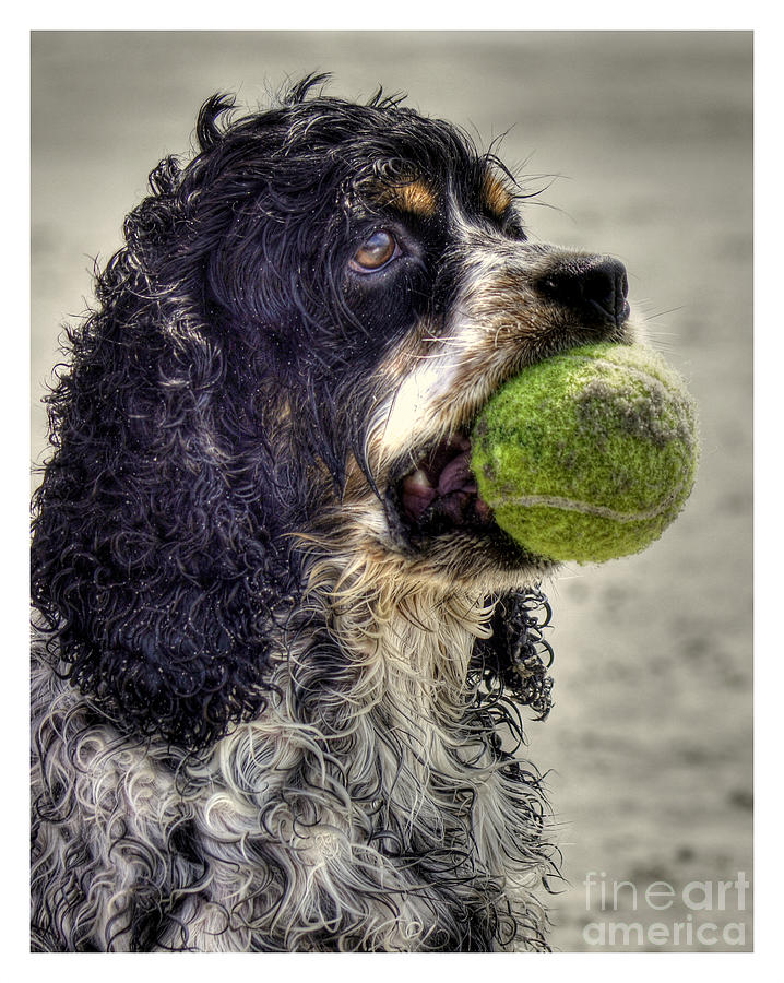 Im Ready To Play Photograph  - Im Ready To Play Fine Art Print