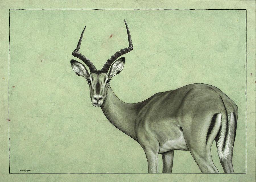 Impala Painting