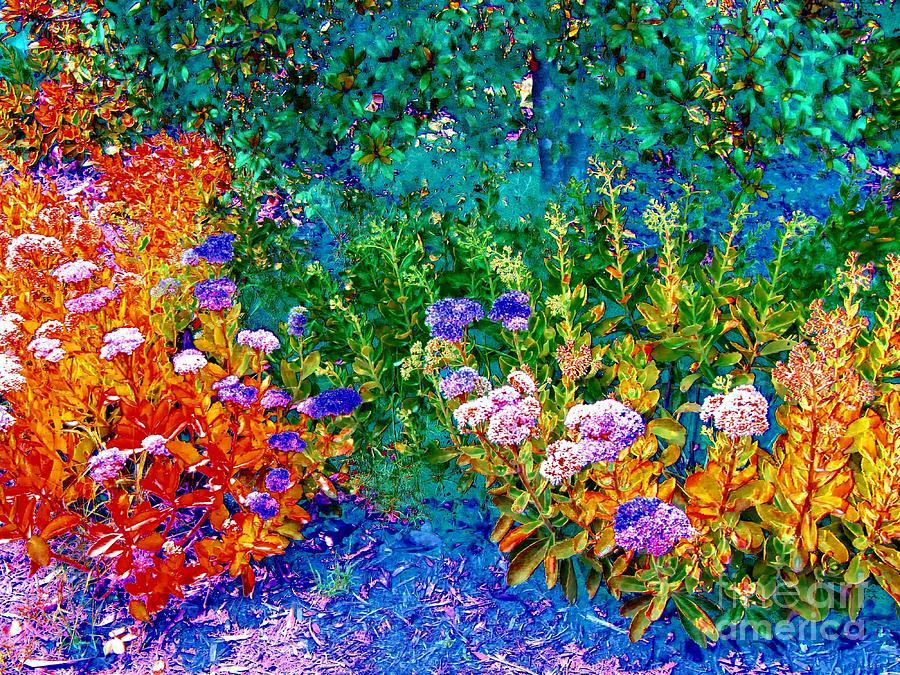 Impressionistic Garden Photograph