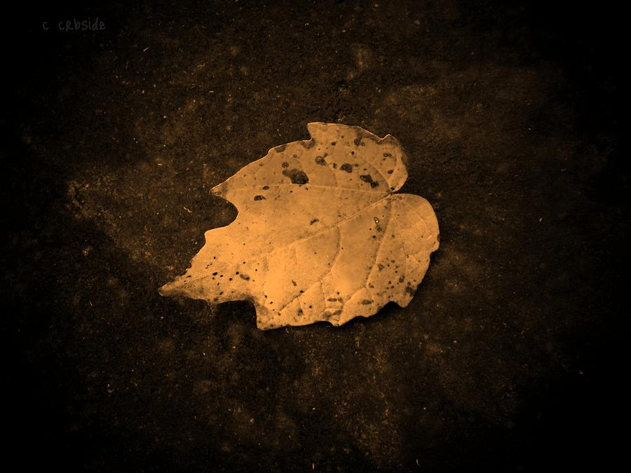 Leaf Photograph - Impressions by Chris Berry