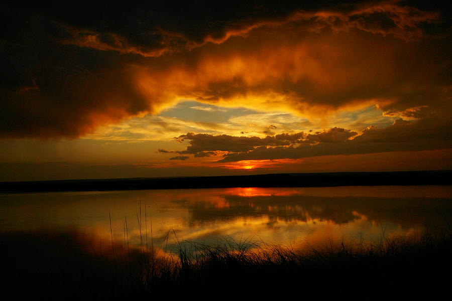 Reflections Photograph - In All His Glory by Jeff Swan