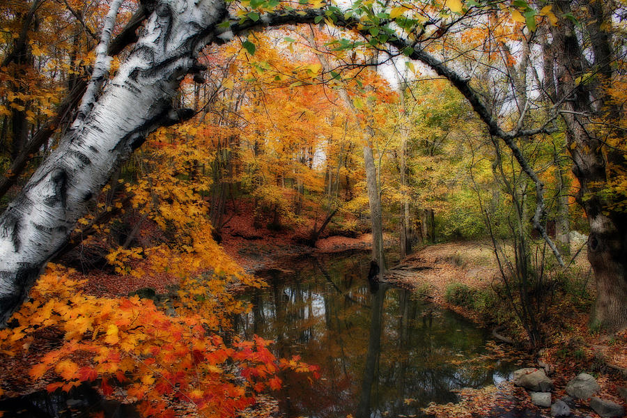 Autumn Photograph - In Dreams Of Autumn by Kay Novy