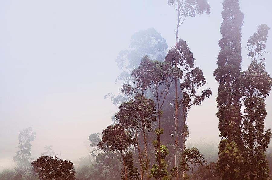 In The Blue Silence. Nuwara Eliya Photograph