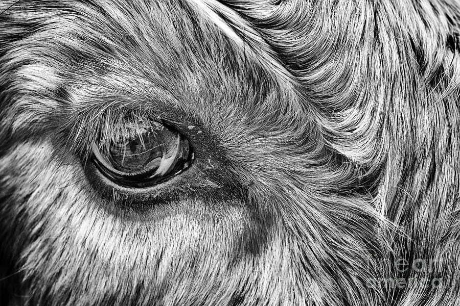 In The Eye Photograph  - In The Eye Fine Art Print