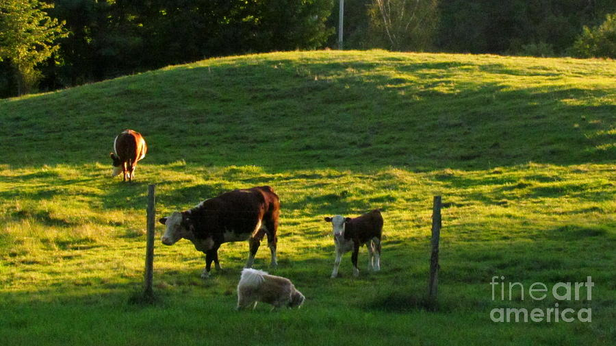 Cows Photograph - In The Field by Randi Shenkman