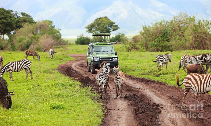 In The Safari Photograph