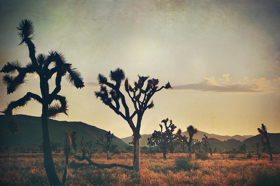 Joshua Tree National Park Photograph - In Your Arms As The Sun Goes Down by Laurie Search