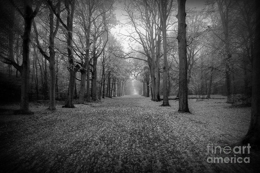 In Your Darkest Hour Photograph