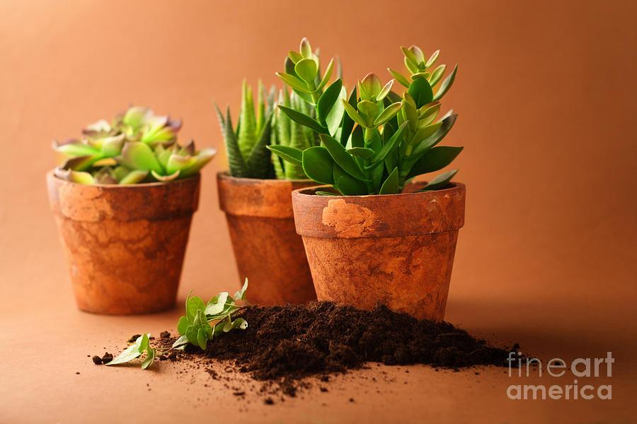 Indoor Plant Photograph