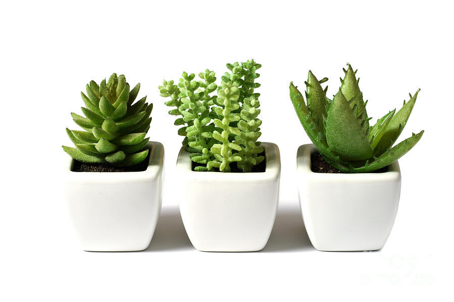 Indoor Plants Photograph