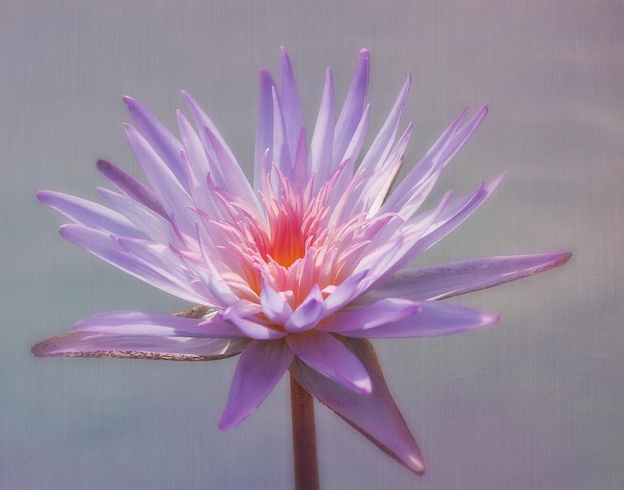 Purple Photograph - Inner Glow by Kim Hojnacki